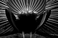 Animals and Insects - Black and White